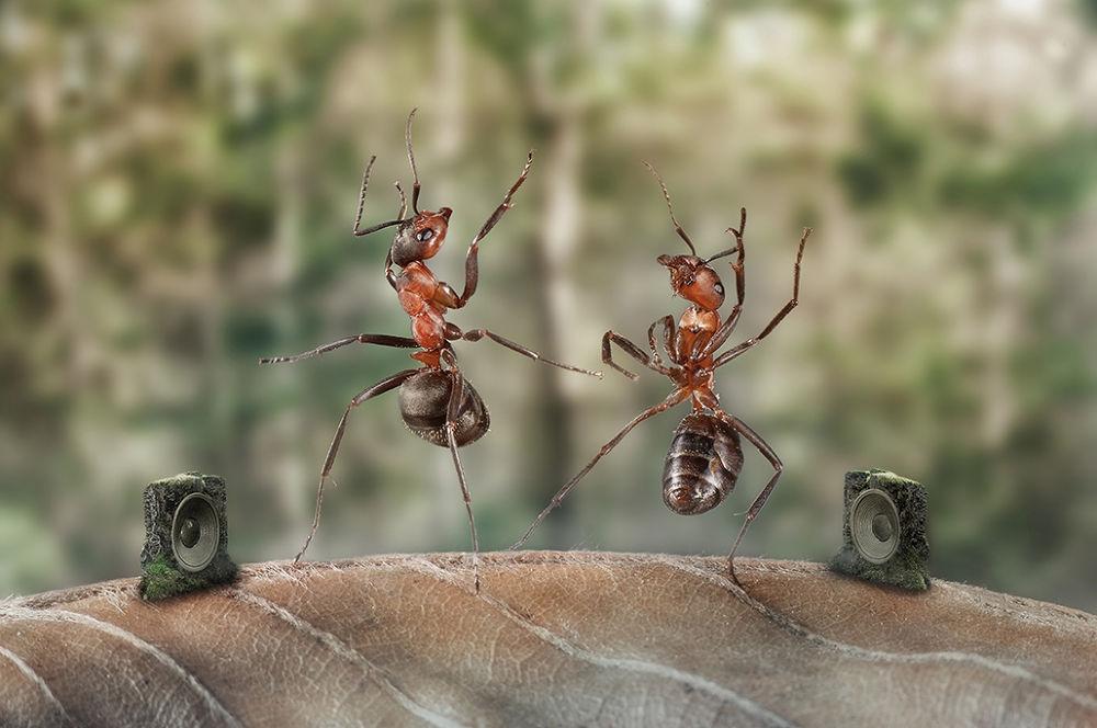 Dancing Ants by Wolfgang Korazija