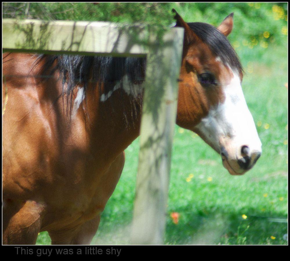 Shy horse by wallycatgirl