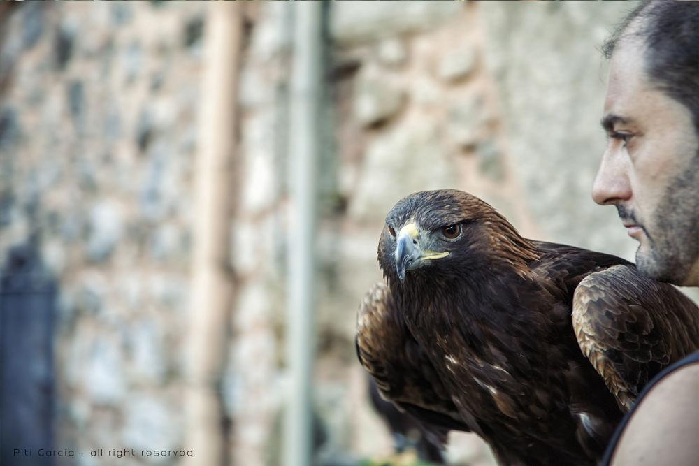 Eagle by Piti García