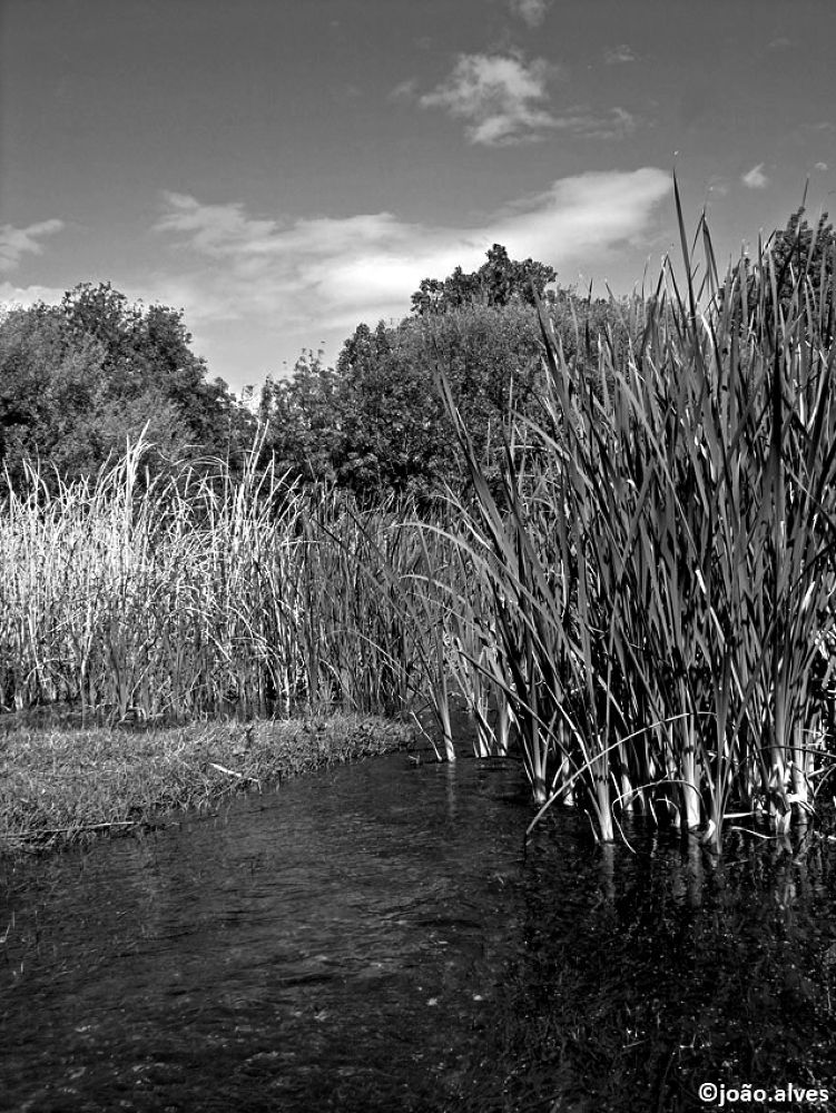 nas margens do meu rio (on the banks of my river) by alvesjp