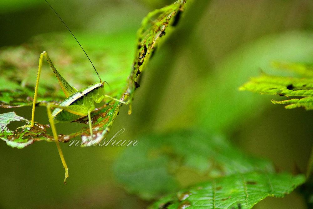 Go Green by Niroshan