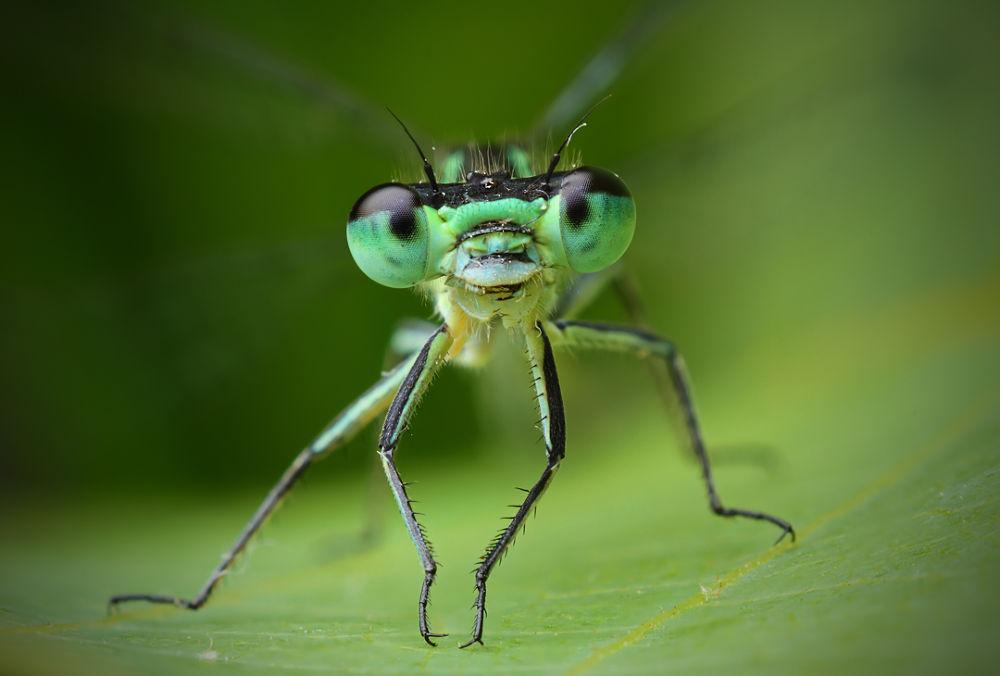 Dragonfly by eddiedean