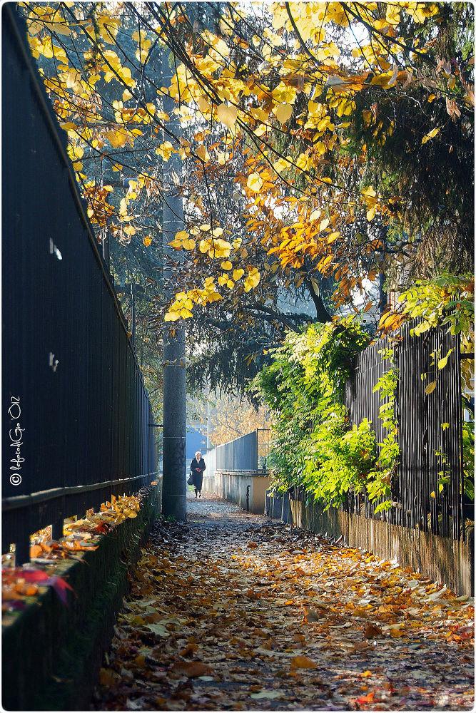 Autumn # 29 by giorgiopassoni1