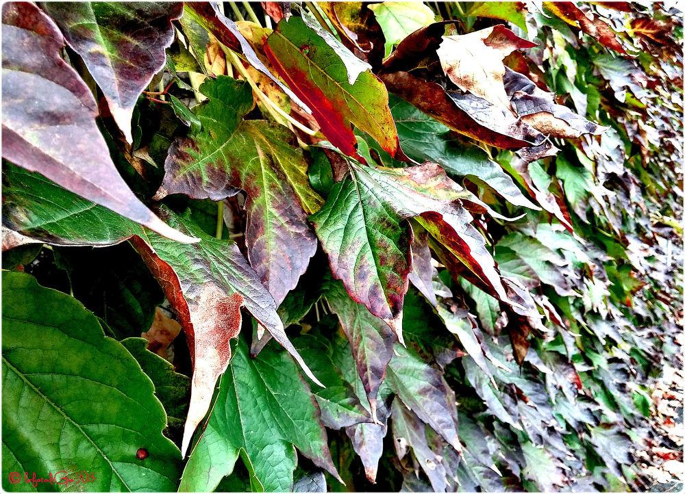 autumn 050 by giorgiopassoni1