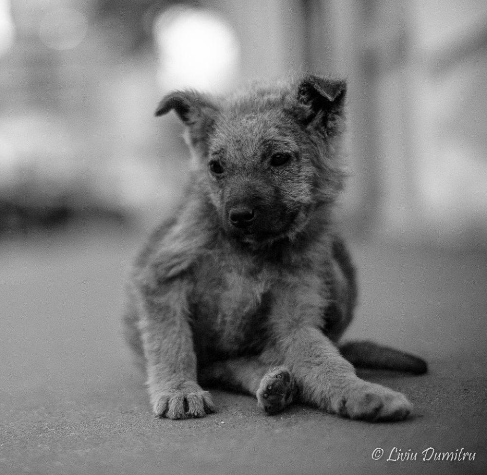 Dog by Liviu Dumitru