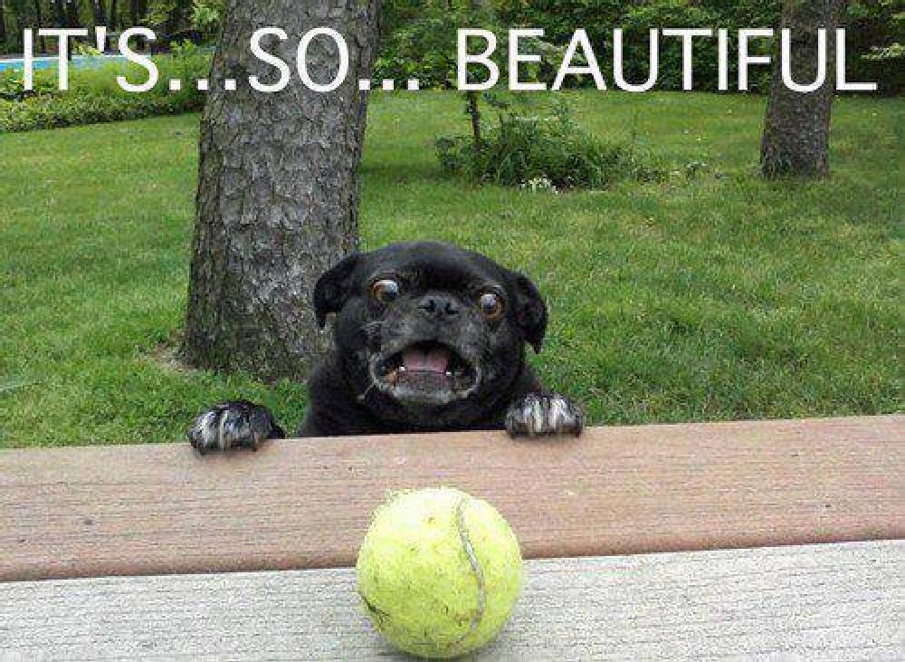 Ermahgerd Dog Meme Golfclub