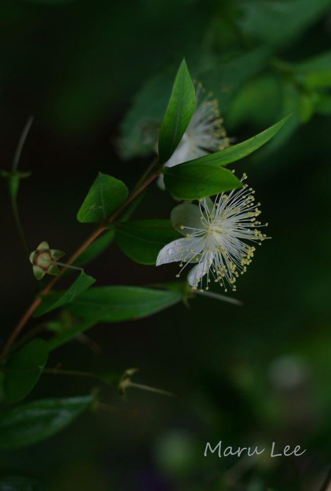 Botanical Garden  K-5IIs 026.JPG by marulee2