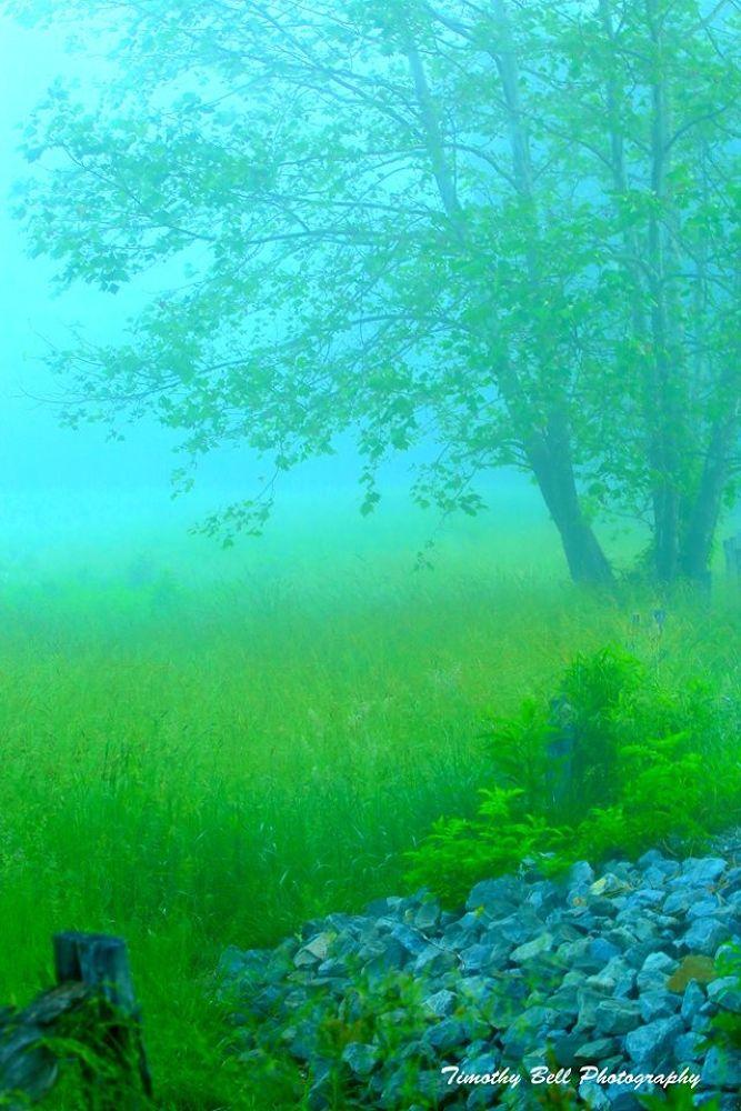 Misty Morning by timothybell1800