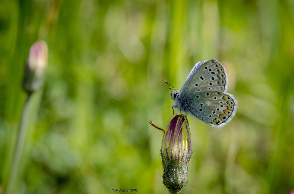 papillon.jpg by shroedinger
