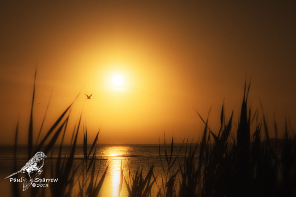 Photo in Random #sunset #bribie island #redbeach #gold #clouds #sky #seagull
