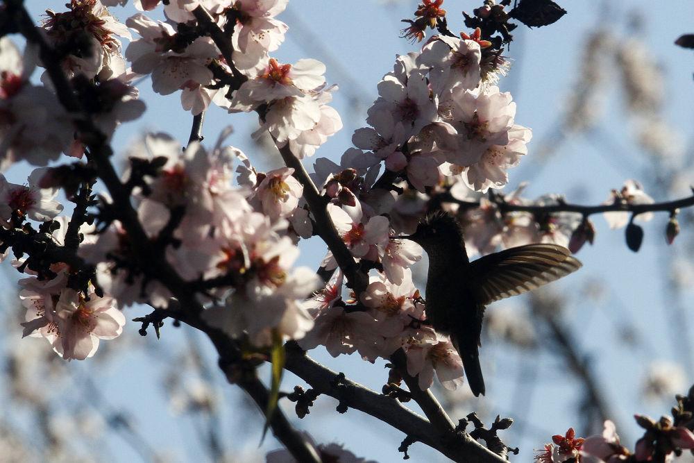 Aves en su hábitat  by rolooyarzun