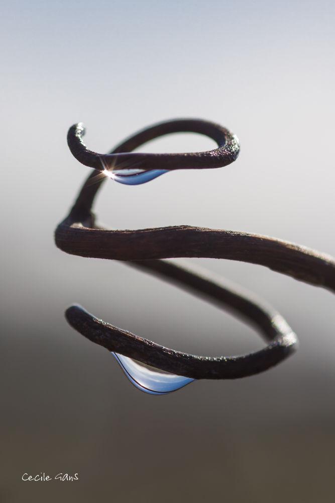 DNA by cecilegans