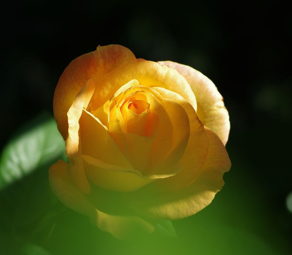 Yellow by David Amaral