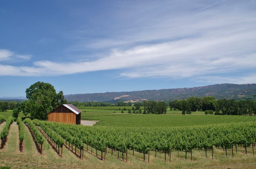 Vineyards and Orchards PNTX1686 by David Amaral