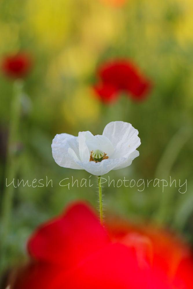IMG_055fbhf9.jpg by umeshghai