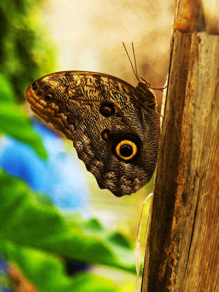 butterflyyy.jpg by basiaslowik