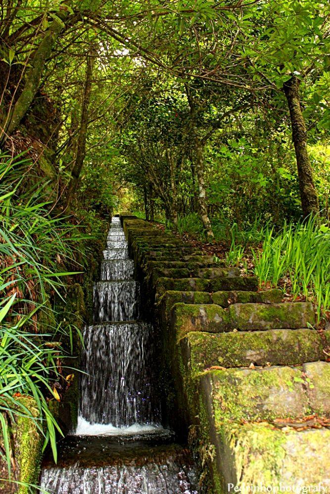 Ribeiro Frio, Madeira by pmphotograph77