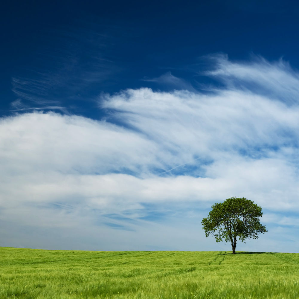 A Single Tree by Juergen Mayer