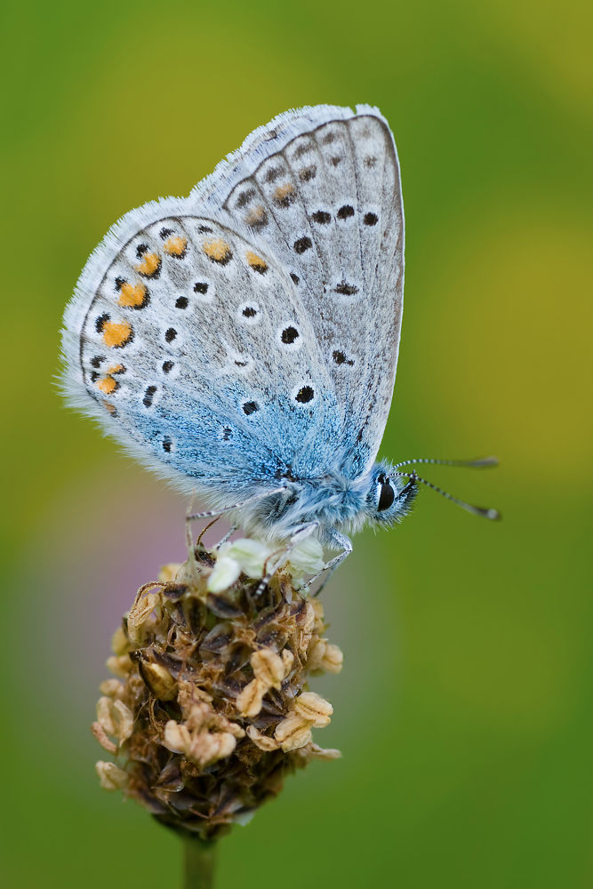 Small Butterfly by Juergen Mayer