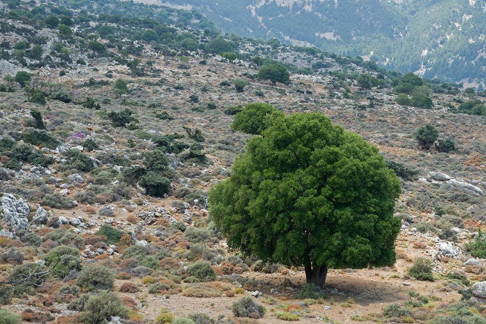 A Single Tree by Juergen Mayer