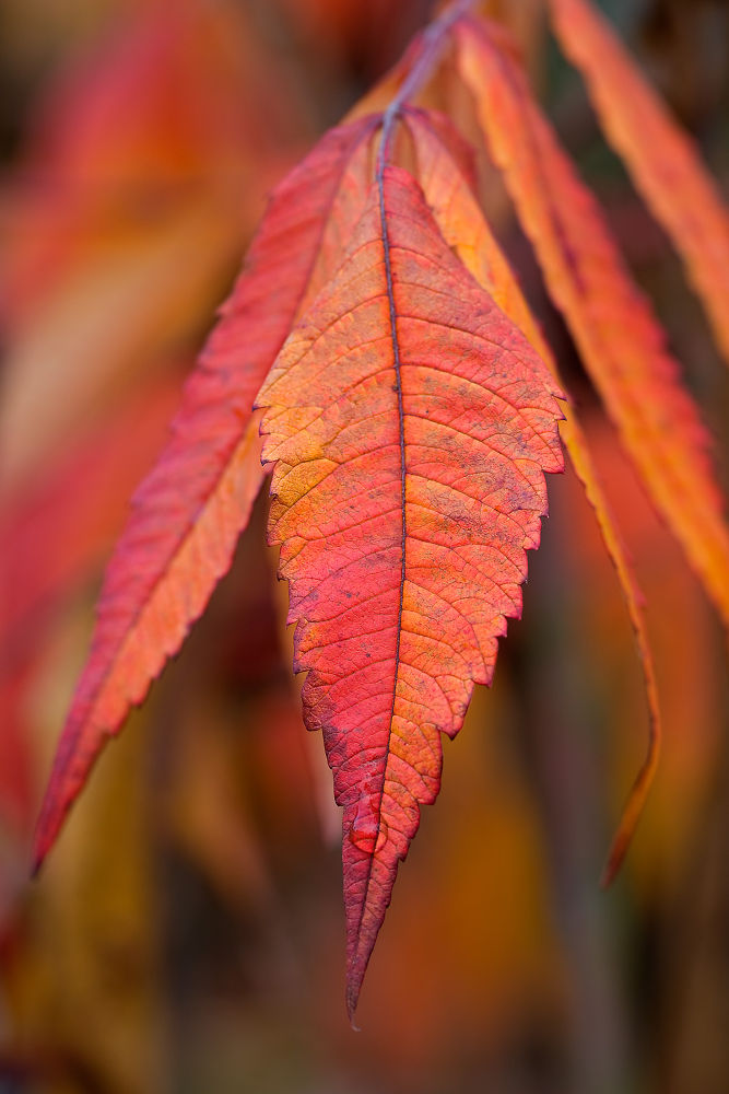 Red Leafs by Juergen Mayer