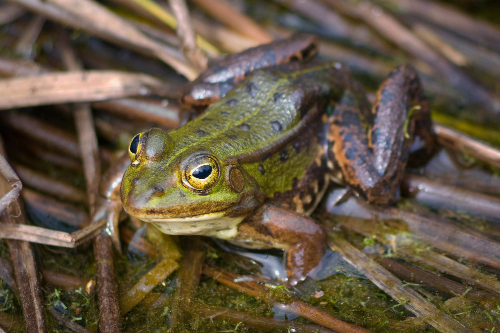 Frog by Juergen Mayer