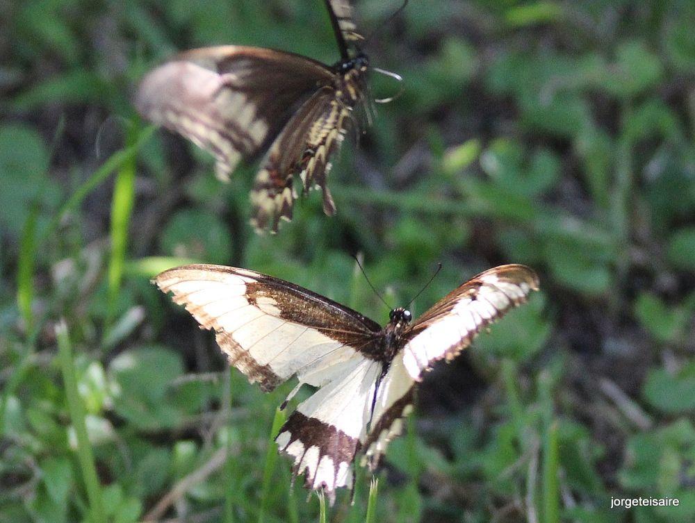 Vuelo de mariposas by jorgeteisaire