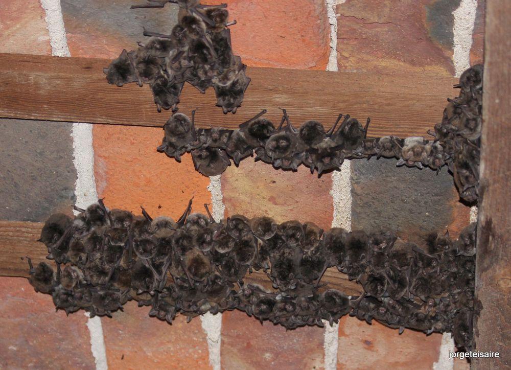 Bats by jorgeteisaire
