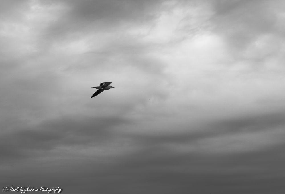 Freedom. by henkspijkerman