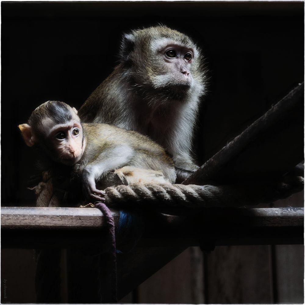 """monkeys living"" by shadow"