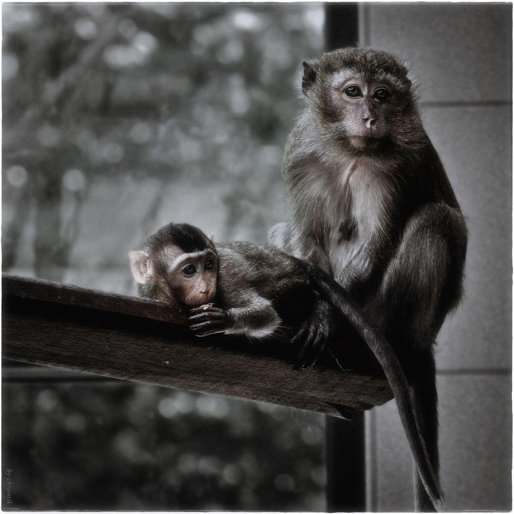 """Monkeys Living no.9"" by shadow"