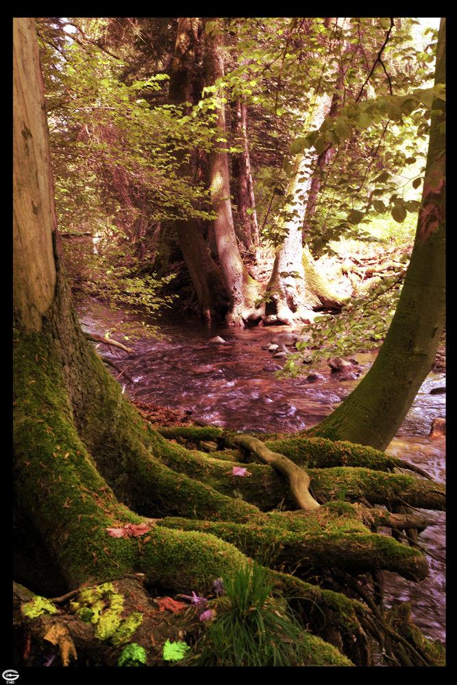 mossy tree by strangecave