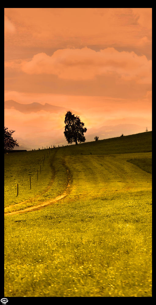 Photo in Nature #tree #lonly #field #switzerland #way #road #green #yellow #orange #alps #mountain #mountains #sunset