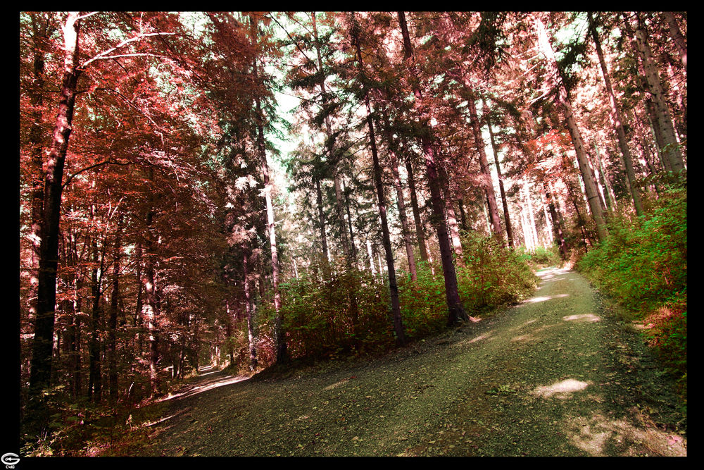 Photo in Nature #forest #red #way #walk #walkway #nature #tree #green