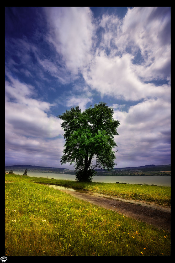 Photo in Nature #nature #naturescape #landscape #tree #way #road #sea #ozean #river #water #swim #walking #sky #green #blue #flower #flowers #leaves #spring #autuum #summer