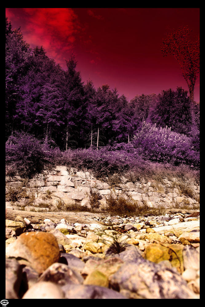 Photo in Nature #forest #tree #stone #sky #clouds #nature #naturescape #landscape #purple #red #yellow #brown