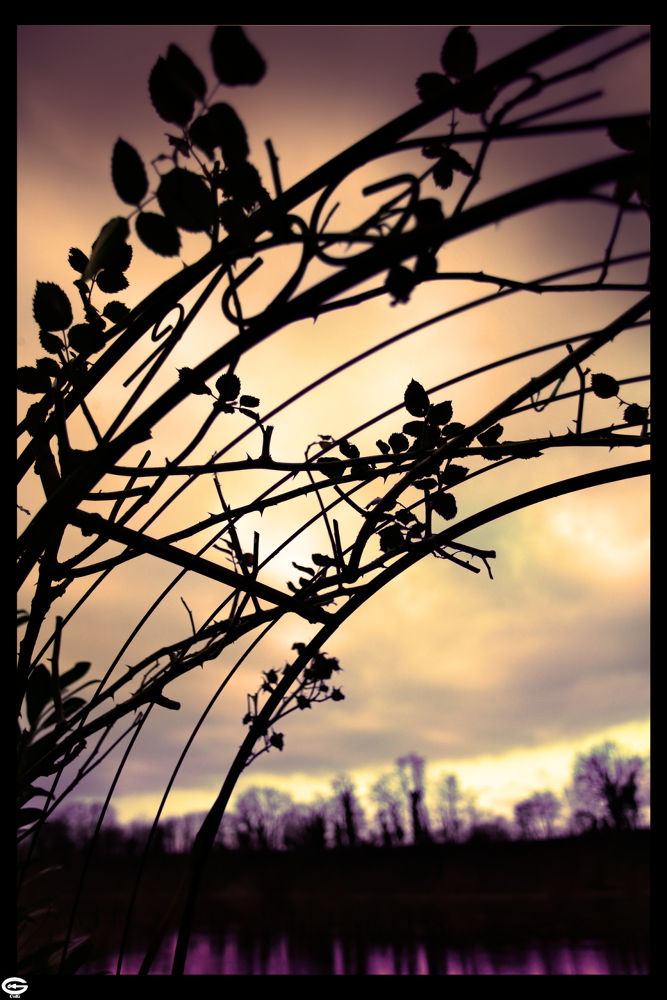 roses enjoy the sunset by strangecave