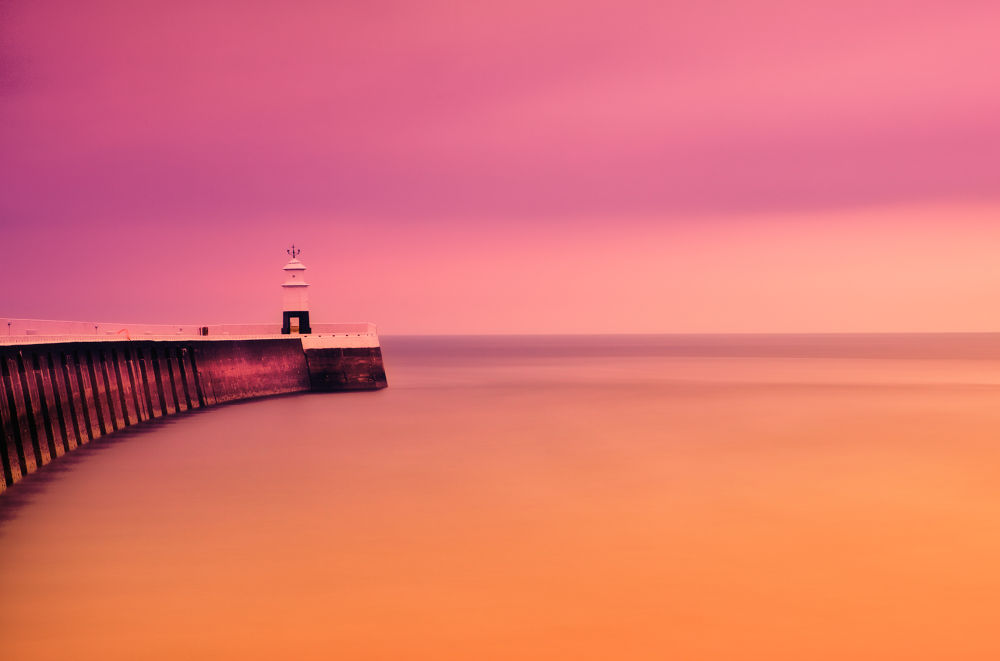 In The Pink by clinthudson