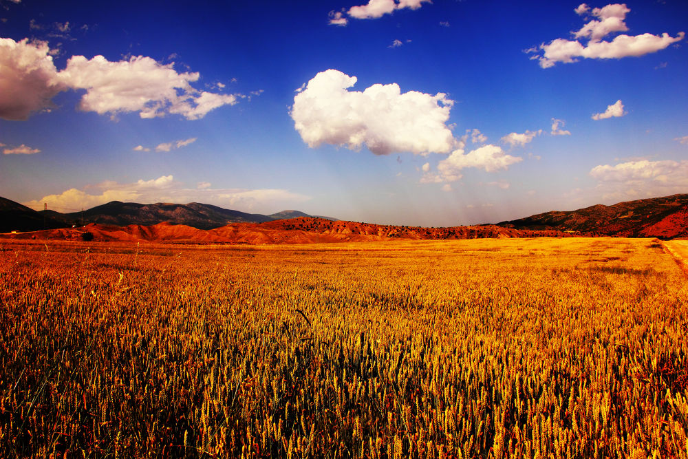Harvest by ahmet konukseven
