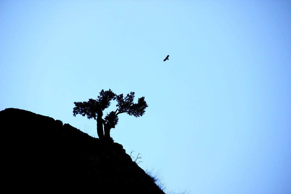loneliness by ahmet konukseven