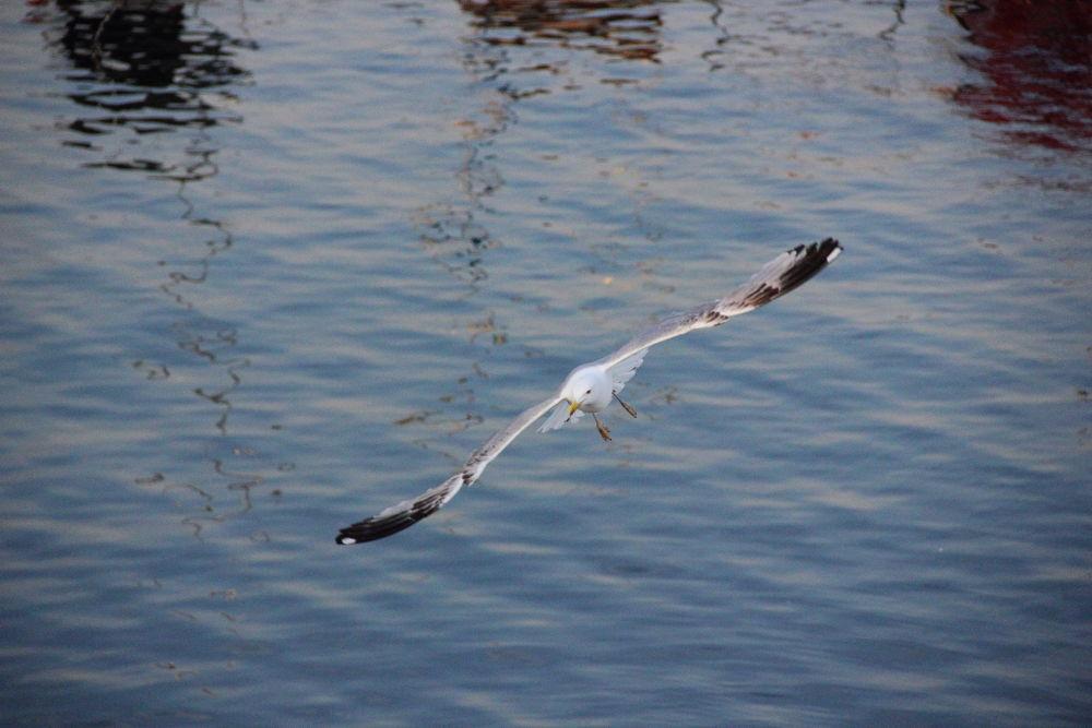 Seagull by ahmet konukseven