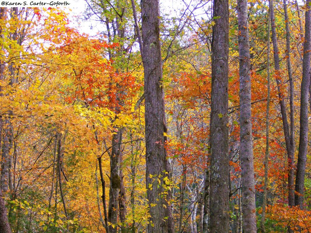 Autumn Time 2 by Karen Carter-Goforth