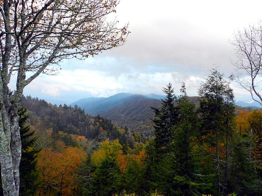 Mountain View (3) by Karen Carter-Goforth
