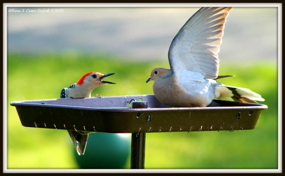 Who Invited You to Dinner?? by Karen Carter-Goforth
