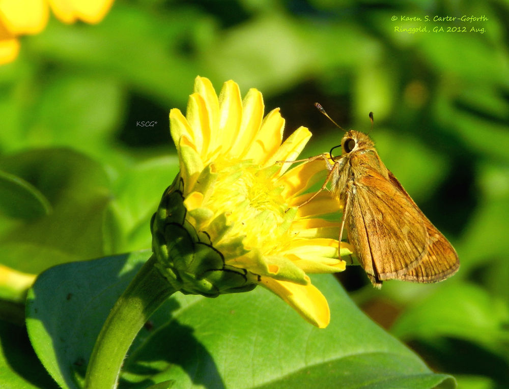Butterfly Perched on a Flower by Karen Carter-Goforth