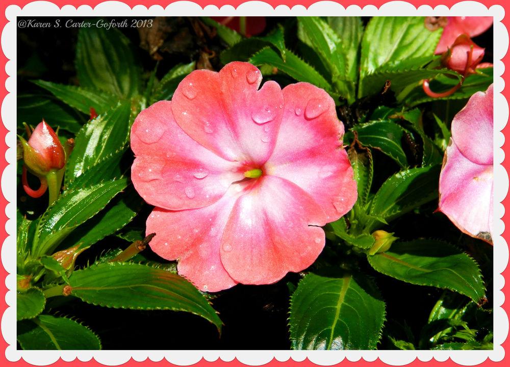 Pink Flower by Karen Carter-Goforth