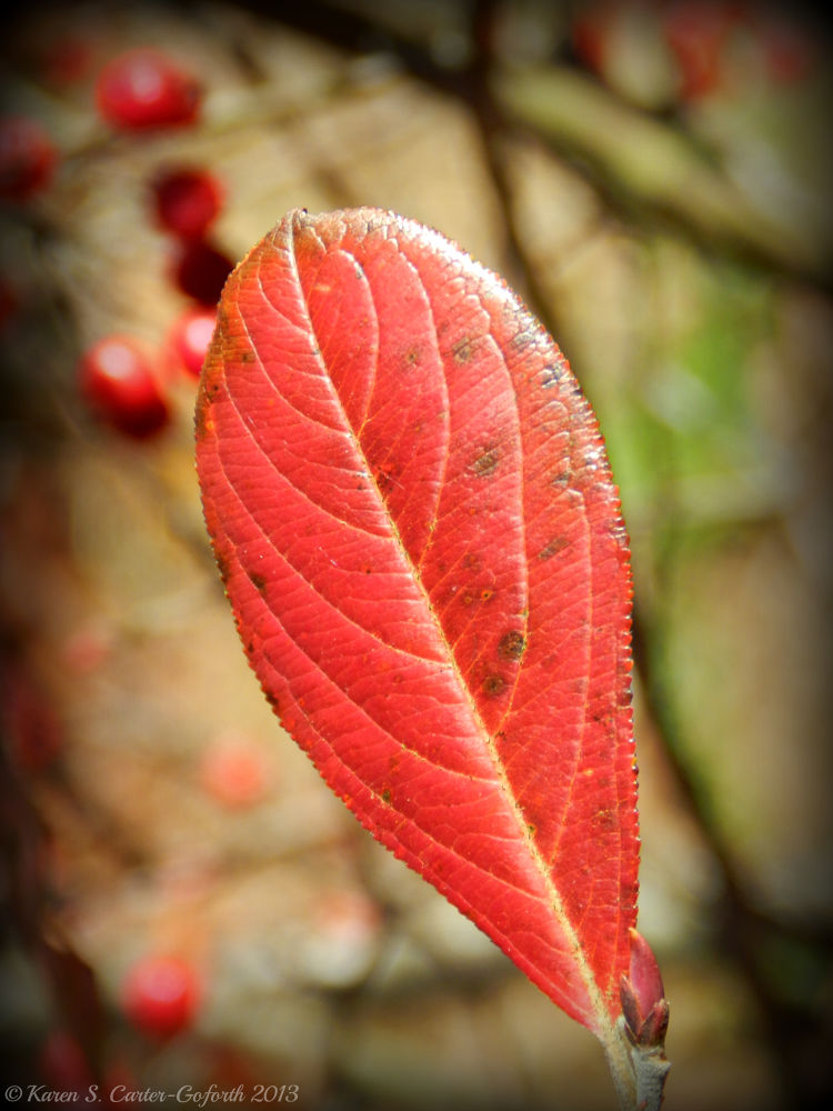 Autumn Is Here - Red Leaf by Karen Carter-Goforth