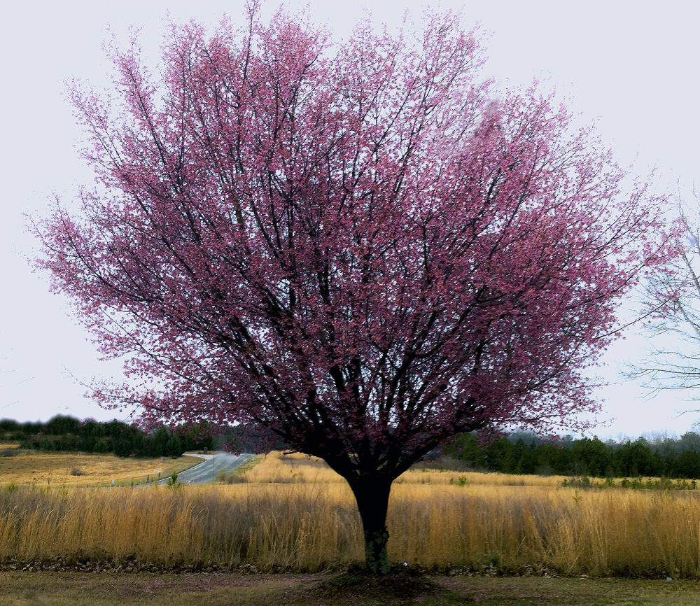 Spring by amaldon