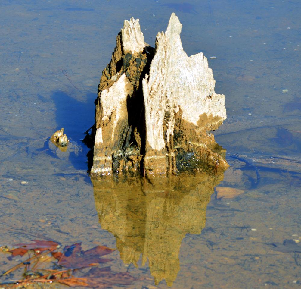 The Rock by amaldon