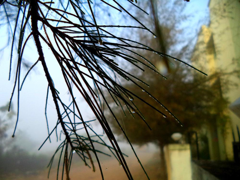 Rain Drops  by PRasad Ahirrao